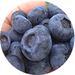 Krzewy owocowe
